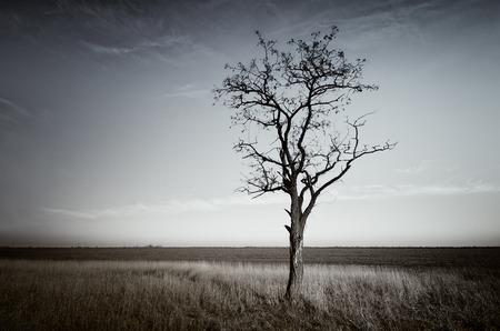 lonely tree: Lonely dead tree. Art nature.