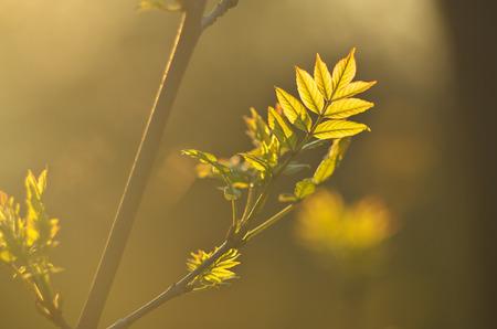 spring leaf: Spring leaf of tree. Nature composition.