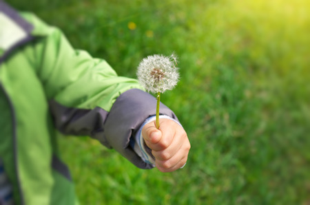 gentleness: Dandelion in child hand. Green bokeh and soft daylight. Stock Photo