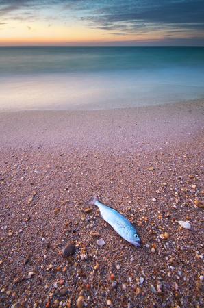 Fish on the seashore. Nature compositioin.