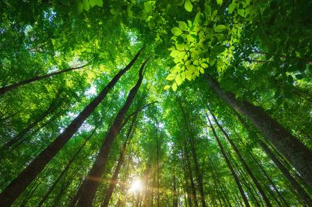 Into the forest. Nature composition. Foto de archivo