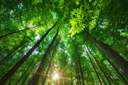 green forest: Into the forest. Nature composition. Stock Photo