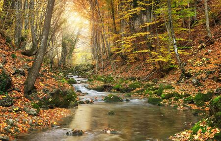 creek: Autumn river in forest. Stock Photo
