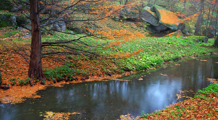 back yard pond: Autumn in park. Composition of nature.