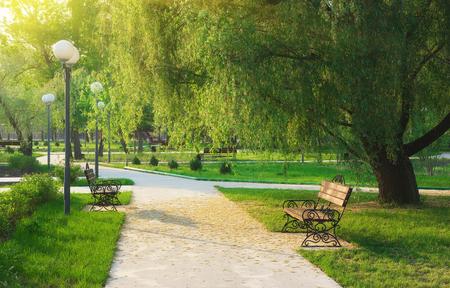 Ochtend in het park. Samenstelling van de natuur. Stockfoto