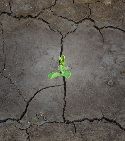 agricultural life: Sprouts in ground. Conceptual and agricultural scene.