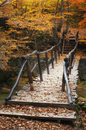bridge in nature: Bridge over river in autumn forest. Nature composition.