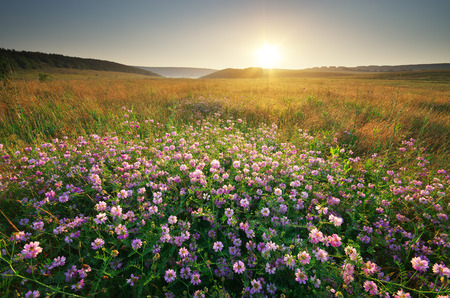 mountain meadow: Flower in meadow. Landscape nature composition. Stock Photo