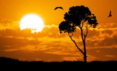 orange sunset: Africa safari nature sunset. Element of design. Stock Photo