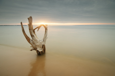 snag: Snag on the shore. Beautiful and conceptual nature composition. Stock Photo