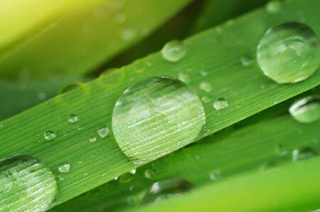 kropla deszczu: Makro kropla deszczu. Skład charakter. Zdjęcie Seryjne