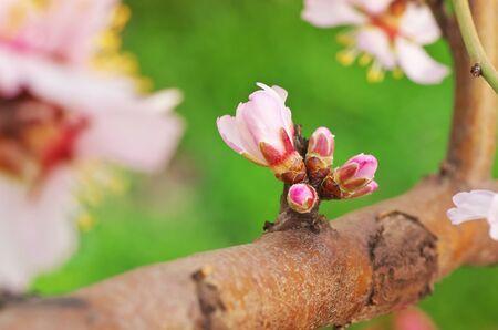 Frühlingsblume auf Baum. Element des Designs.