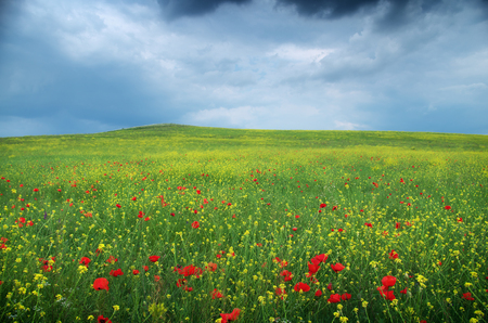 green meadows: Spring flower meadow. Composition of nature.