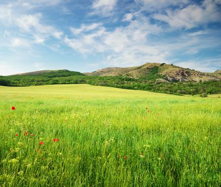Vert prairie de printemps en montagne. Composition de la nature.