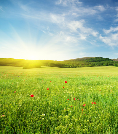 Groene lente weide in de bergen. Samenstelling van de natuur. Stockfoto