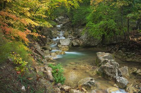 Autumn rill flow. Nature composition. Stock Photo