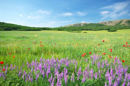 Prairie verte en montagne. Composition de la nature