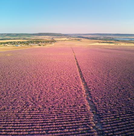 Aerial big meadow of lavander. Nature composition.