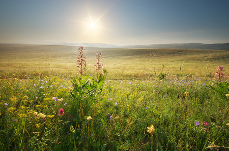 Morning nature meadow landscape. Spring flowers. Calm scene. Stock Photo