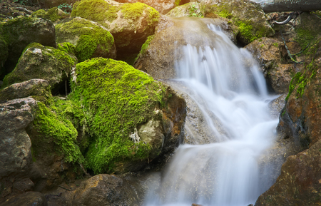 Spring rill flow. Nature composition.