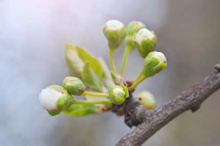 Spring buds on tree. Composition of nature. Stock Photo