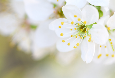Spring flower on tree. Composition of nature.