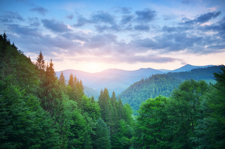 Aerial green mountains hills at sunset . Fir and spruce forest. Composition of nature. Stock Photo