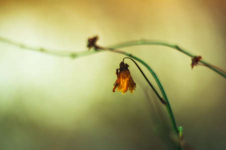 withered flower: Withered flower  Stock Photo
