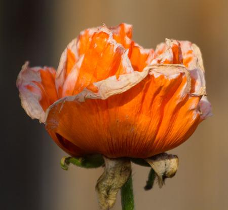 amazing orange flower