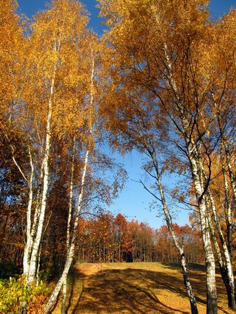sunny autumn day when nature changes color - golden Polish autumn                      Stock Photo
