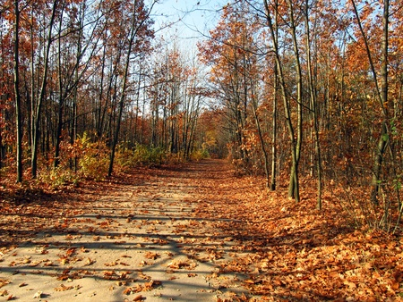 forest road covered with yellow and Brown, both ends of the leaves-Golden Autumn