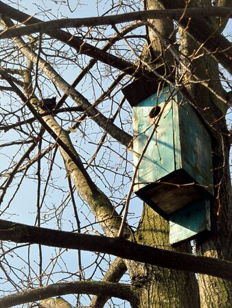 breeding shed for birds on a tree in spring day Stock Photo
