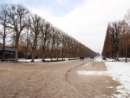 planted: avenues of trees planted during the winter in the gardens of the Royal Palace of Versailles near Paris, France Editorial