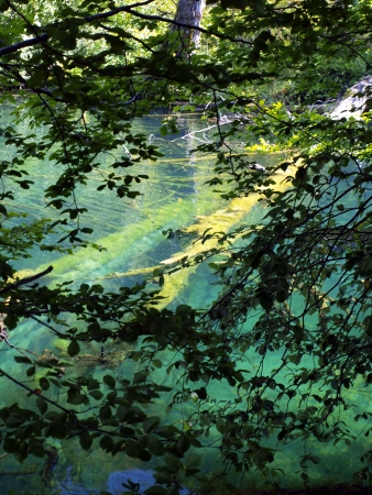 tree over the water and in the water, the blue lake in Plitvice, Croatia, National Park photo