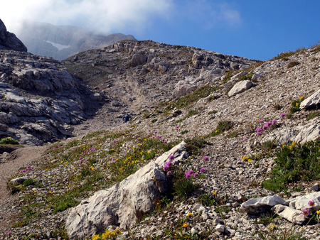 climatic: beautiful flowers growing in the high mountains in extreme climatic conditions, the Brenta Dolomites in Italy Stock Photo