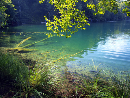 fish visible in clear water, blue lake in Plitvice, Croatia, National Park UNESCO photo