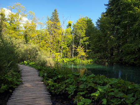 plitvice: Wooden path in National Park in Plitvice  in Croatia