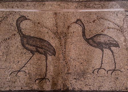 multiplicacion: Mosaico antiguo. Iglesia de la Multiplicaci�n de los Panes y los Peces, Tabgha, Israel Editorial