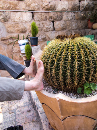 Verifying the cactus has sharp thorns? Joke Imagens