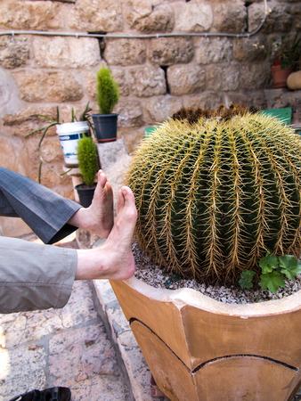joke: Verifying the cactus has sharp thorns? Joke Stock Photo