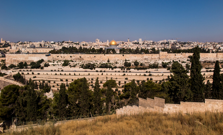 エルサレム、イスラエルを見下ろすオリーブの山に咲く黄色いマスタード聖書ブッシュ