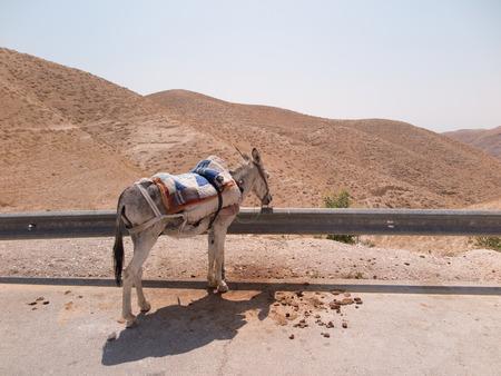 judah: Desert Judah in Israel, donkey waiting by the roadside for tourists Stock Photo