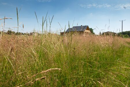 meadow with tall grass around a wooden house