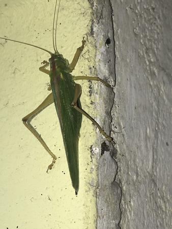 A green grasshopper sitting on a house wall Stok Fotoğraf