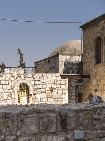 a cat on the wall in the old district of Jerusalem in Israel