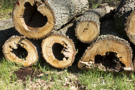 cut oak trunks with a hole (hollow) in the middle lying on the pile next to the road in the forest