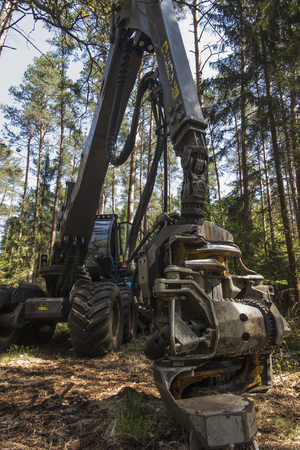 forestry harvester during a stoppage among trees in the forest