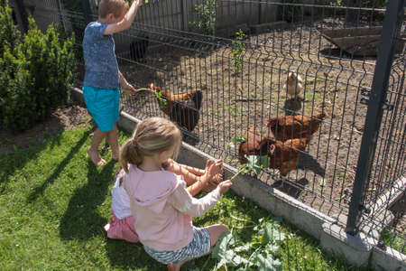 the children feed the chickens that are behind the wire mesh fence with the grass and leaves of vegetables