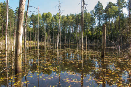 The pits were flooded with water from the iron mine that was sunk a hundred years ago. A place in Silesia called Pasieki, in the forest near Miasteczko Slaskie.