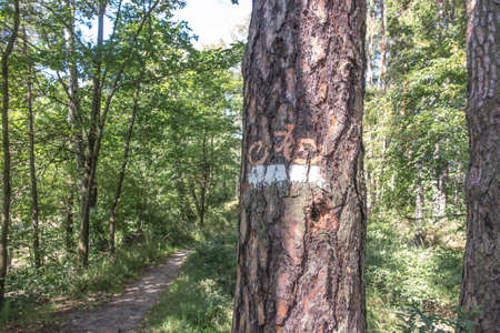 marking of the forest bicycle trail in the forests of Lubliniec in Silesia, Poland 版權商用圖片
